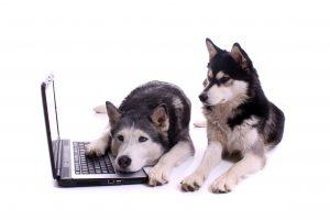 work on your website during coronavirus